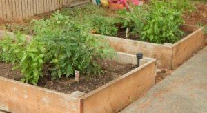 cropped garden